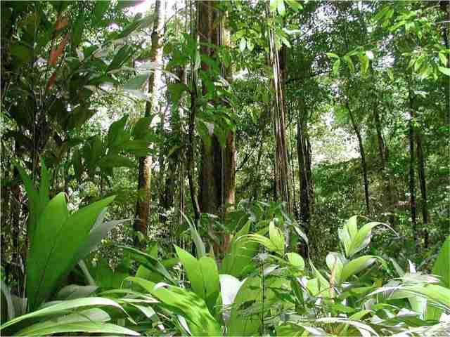 floresta_amazonica