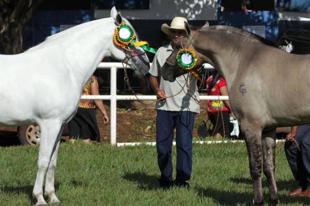 cavalo com diploma