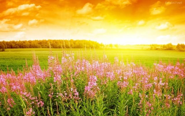 flores-hermosas-5583