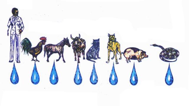 ANIMAL RACIONAL E IRRACIONAIS